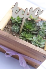 Succulent boxes make great party favors or reception table centerpieces